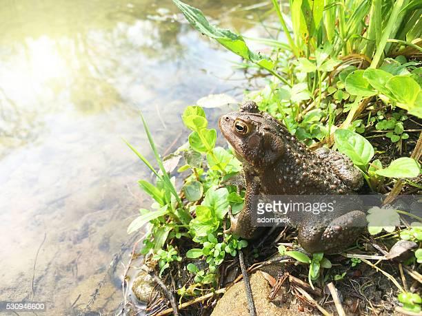 Frosch in der Nähe von einem Teich