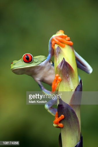 A frog clinging onto a stem leaf