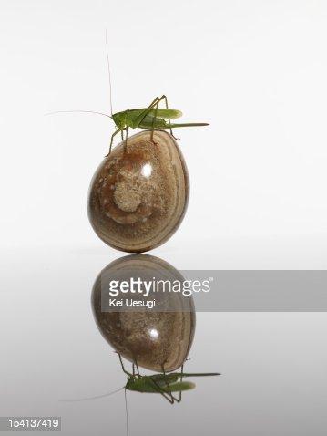 Frog & Grasshopper : Stock Photo