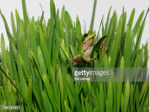 Frog & Grasshopper : Stock Photo