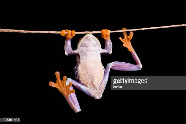 frog hanging on a rope