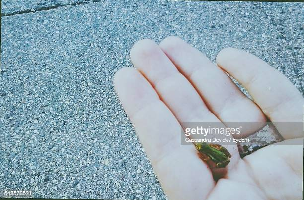 Frog In Hand