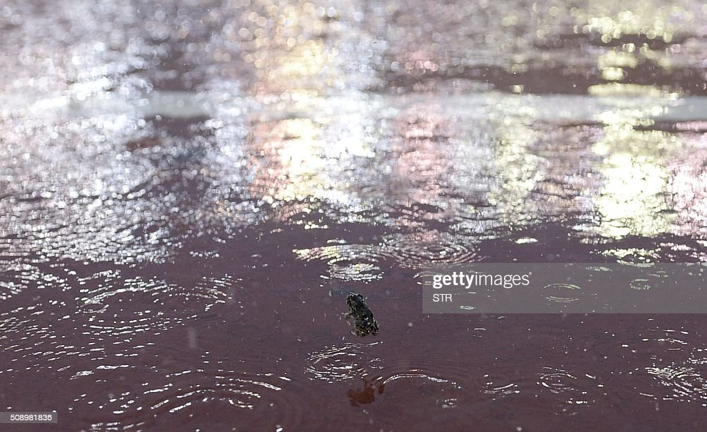 A frog jumps in the flooded pitch of the Monumental Stadium during a heavy rainstorm before the suspension of the Argentine first division football match between River Plate and Quilmes in Buenos Aires, Argentina, on February 7, 2016. AFP PHOTO / STR / AFP / STR