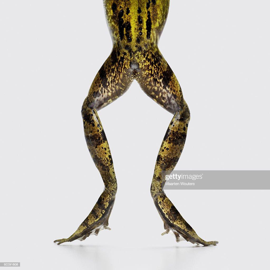 frog legs and bottom : Stock Photo