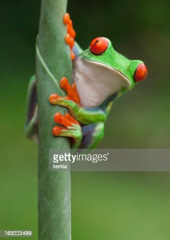 Frog on a plant in its natural environment : Foto de stock