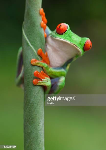 Frog on a plant in its natural environment