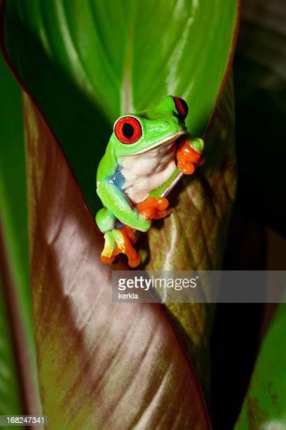 Frosch auf eine Pflanze in seiner natürlichen Umgebung