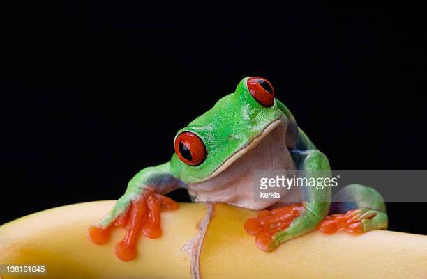 frog on bamboo stem with blach background