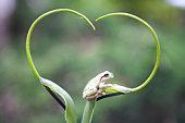 Frog on plant stem, Biei, Hokkaido, Japan