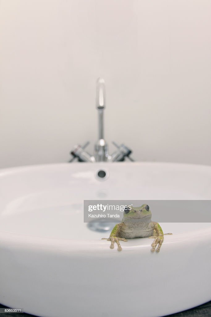 frog on the washbowl : Stock Photo