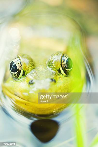 Frosch Porträt