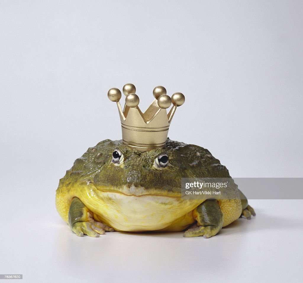 Frog prince with crown : Stock Photo