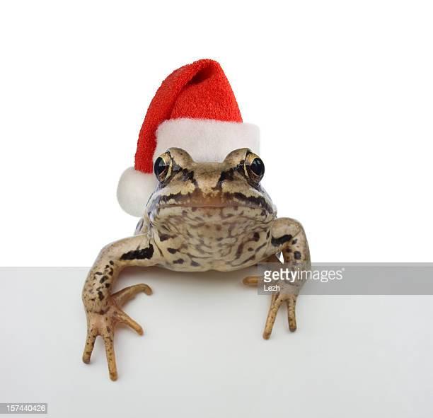 Frosch Santa