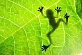 Frog shadow on the leaf Other gallerys: