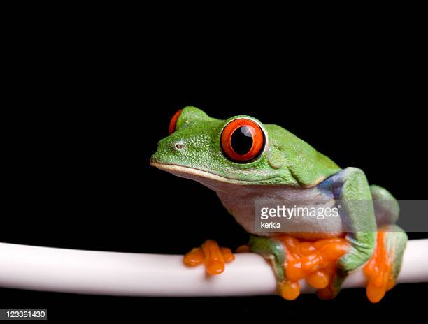 frog sitting on a leed