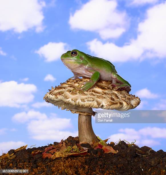 Frog sitting on mushroom against blue sky (Digital Composite)