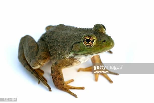 Frosch Sitzbereich