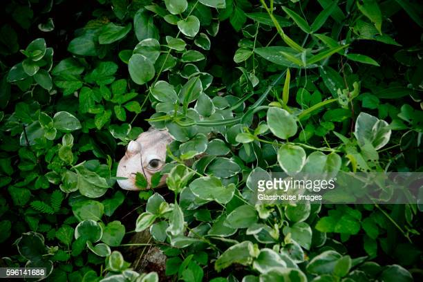 Frog Statue in Green Leaves