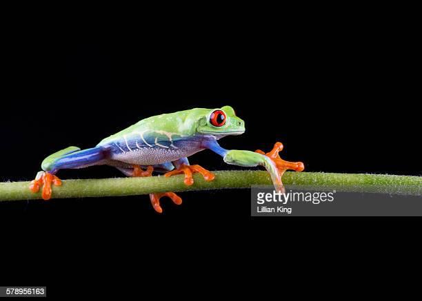 Frog walk!