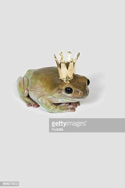 A frog wearing a crown, studio shot