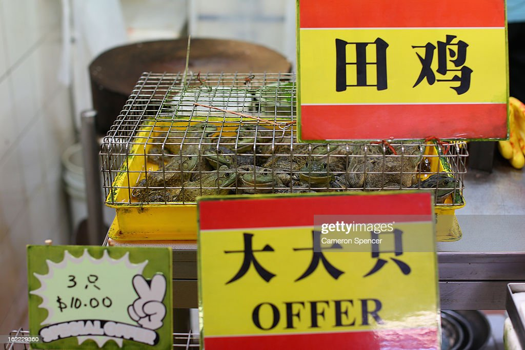 Frogs are displayed for sale at the Singapore Chinatown Complex Wet Market on February 21, 2013 in Singapore. The Chinatown Complex Wet Market is a traditional Asian food market popular with elder Singaporeans that features fresh seafood, meat, vegetables, Chinese groceries and a variety of exotic delicacies. The bustling complex floors are never dry with melting ice and water used to clean the floors, fish and vegetables spilling through the space, thus earning the name 'Wet Market'. The markets have retained their relevance by guaranteeing freshness and a personal service between stall mongers and loyal customers.