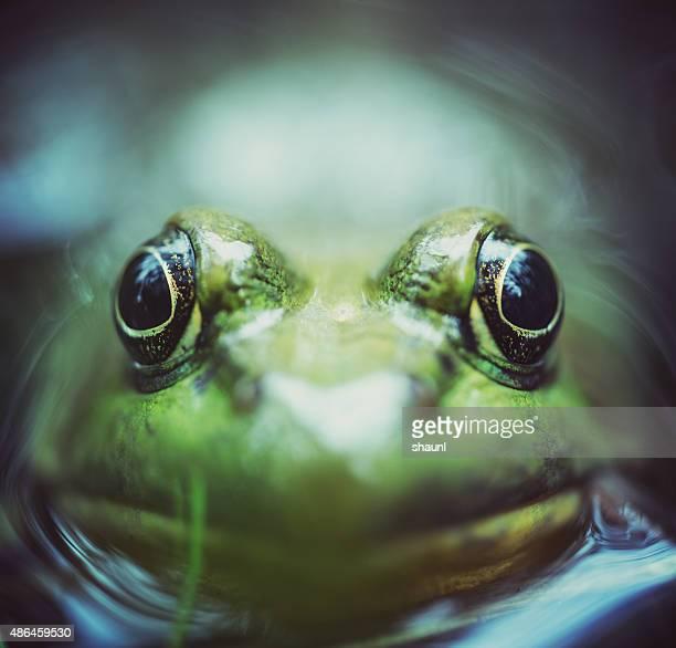 Frog's Level