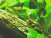 Frogs at Taronga Zoo