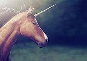 Shot of a beautiful unicorn