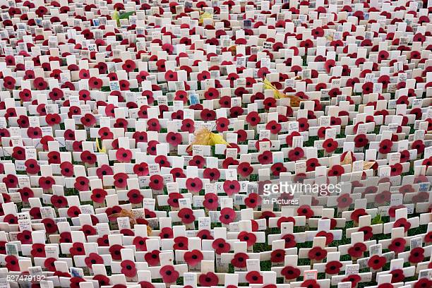 From a height looking down on markers that symbolise war dead hundreds of crosses and poppies mark anonymous fallen British soldiers and other...