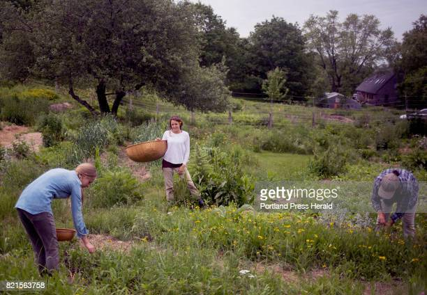 From left Kaela van Breevoort Reed Stephanie Cesario and Zoe Hayes work in one of the gardens at Avena Botanicals Avena gets 70 percent of the...