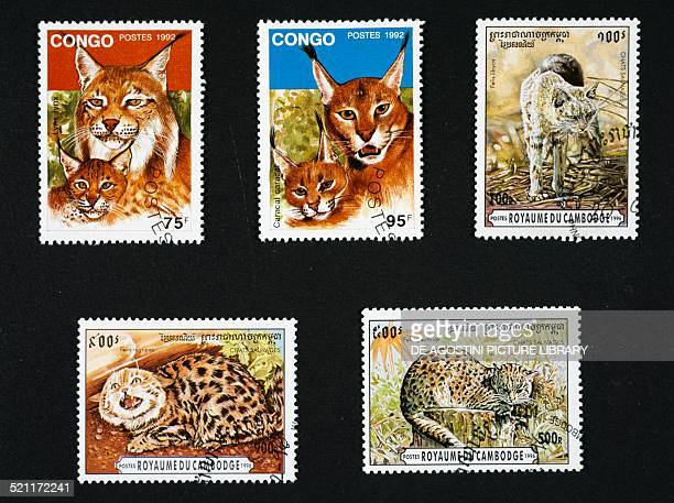 From left to right and top to bottom postage stamps from the series honouring felines depicting a lynx and caracal Democratic Republic of Congo...
