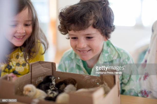 From left Violet Milliken and Ollie Milliken smile as their mom Kristie Green opens up the box of baby chicks that were shipped from a hatchery in...