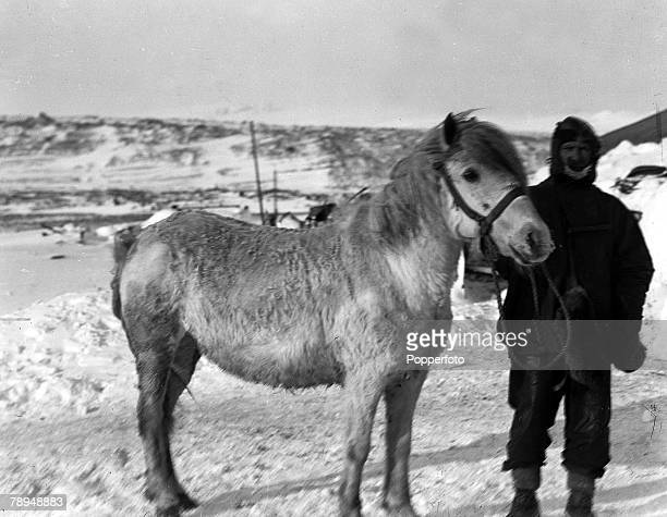 From the Ponting Collection Captain Robert Falcon Scott Photographer Scotts Antarctic Expedition 1910 1912 Petty Officer Patrick Keohane pictured...