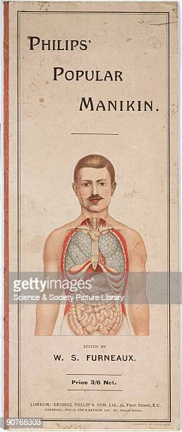 Diagram Of Abdominal Organs Stock Photos And Pictures Getty Images