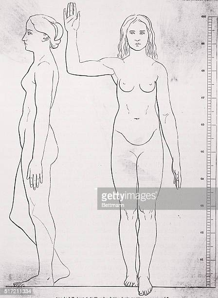 Front view and profile anatomical drawing of a nude woman standing beside a ruler