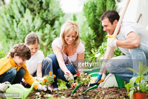Front view of a family gardening together : Stock Photo