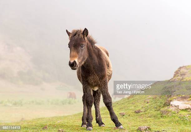 Front View Of Mule Standing On Grass