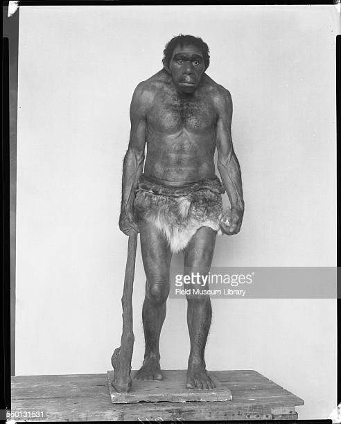 Front view of the figure of a Neanderthal man with club wearing animal skin loin cloth for the Family of Gibraltar group in a diorama by Frederick...