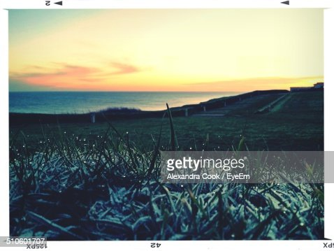 Frost covered grass on coast