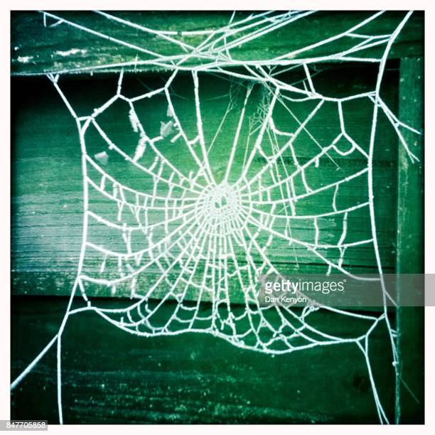 Frost covered spider's web