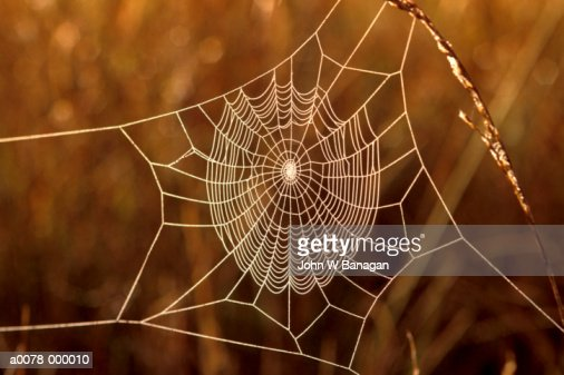 Frost Covering Cobweb : Stock Photo
