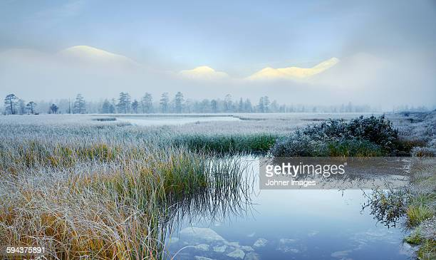 Frost on reeds in lake