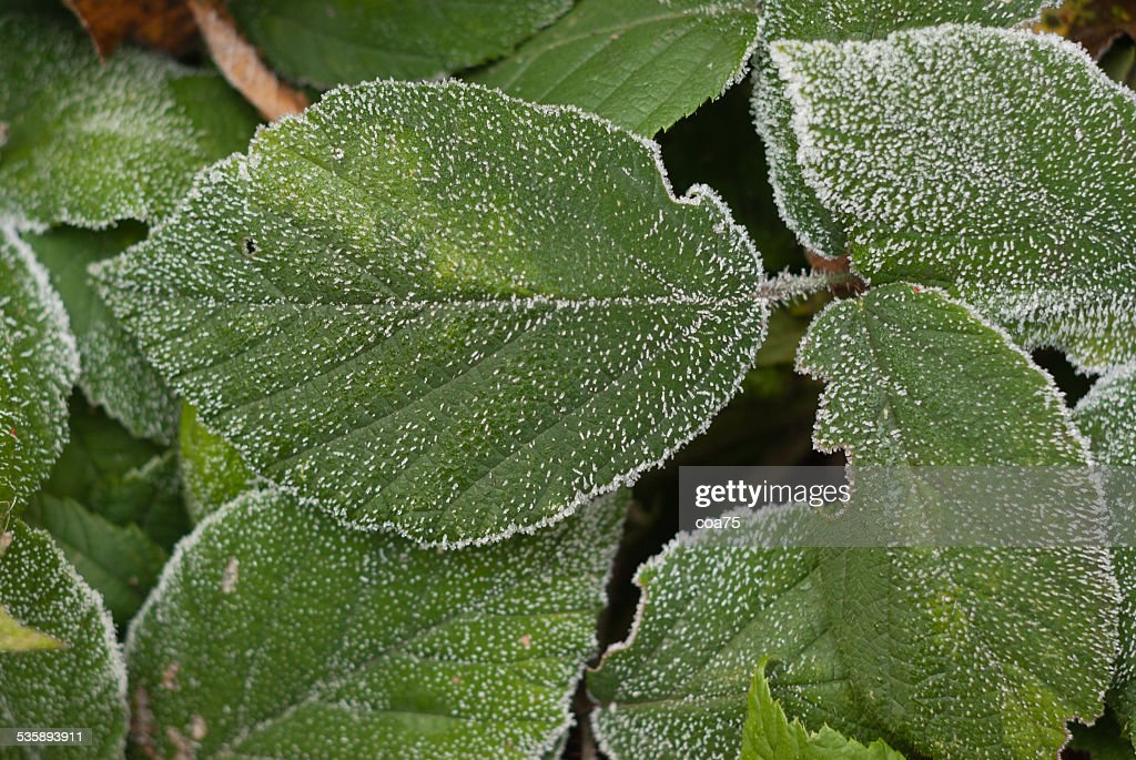 Frost : Stock Photo