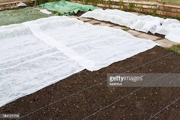 Frost protection draps dans un jardin