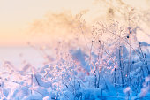 Frosted and snowy grasses