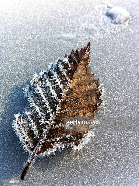 Frosted autumn leaf