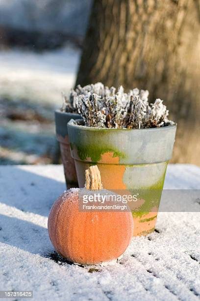 Frosted still life