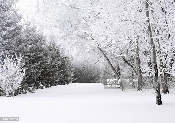 冷えた冬の庭園