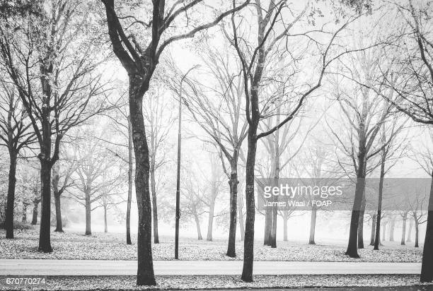Frozen bare trees in foggy weather
