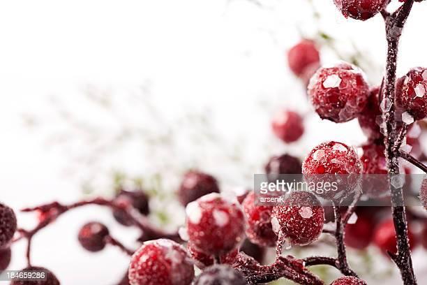Gefrorene Weihnachten Beeren